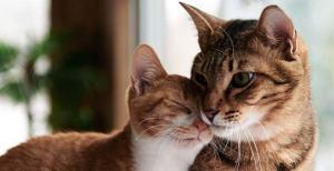 Lejos de perder su cabeza, una persona rodeada de gatos fortalecerá su salud mental y cardiovascul
